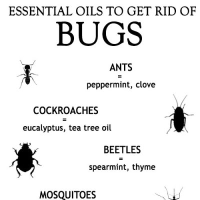 LIST OF TOP ESSENTIAL OILS TO GET RID OF BUGS