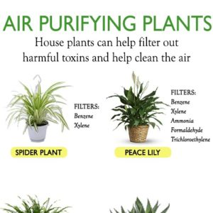10 BEST AIR PURIFYING PLANTS