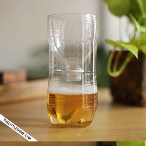 DIY natural Fruit Flies, wasps, and Mosquito Trap
