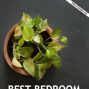 Best Bedroom Plants That Help You Sleep Better